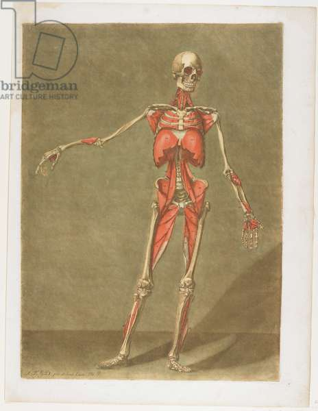 Flayed Skeleton, from Cours complet d'anatomie, published Nancy, 1773