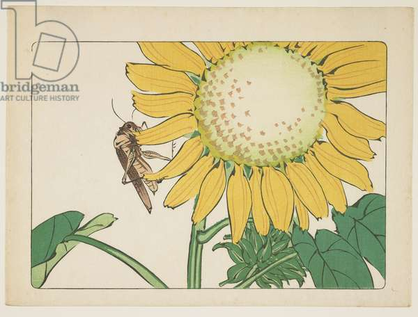 (Grasshopper and sunflower), c. 1877