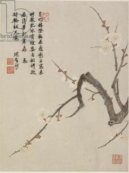 Blossoming plum from a Flower Album of Ten Leaves, 1656 (ink & colour on paper)