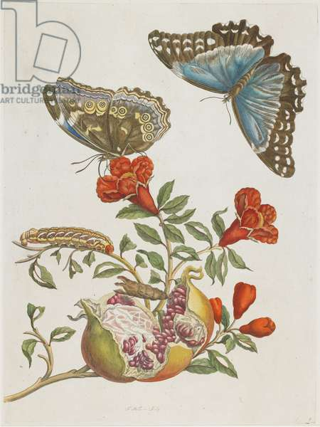 Blue Butterflies and Pomegranate, 1705-1771