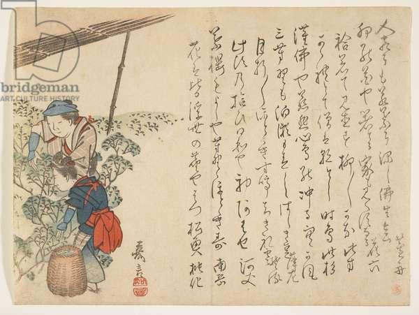 Tea Pickers, c.1830-44 (colour woodblock print)
