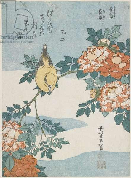 """Black-Naped Oriole and China Rose"", c. 1833"