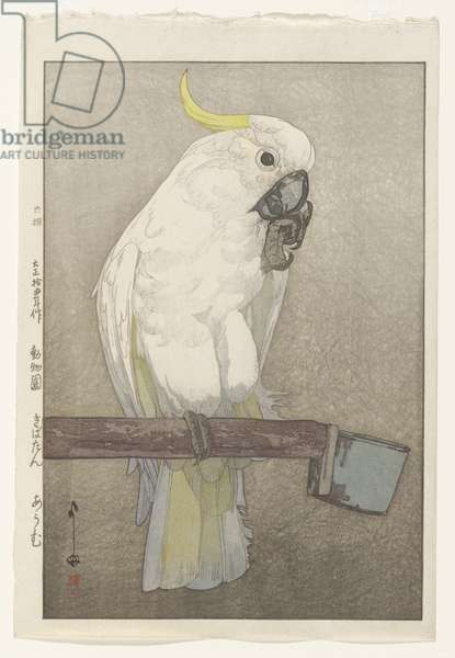 Sulphur-crested Cockatoo, 1926 (colour woodblock print)