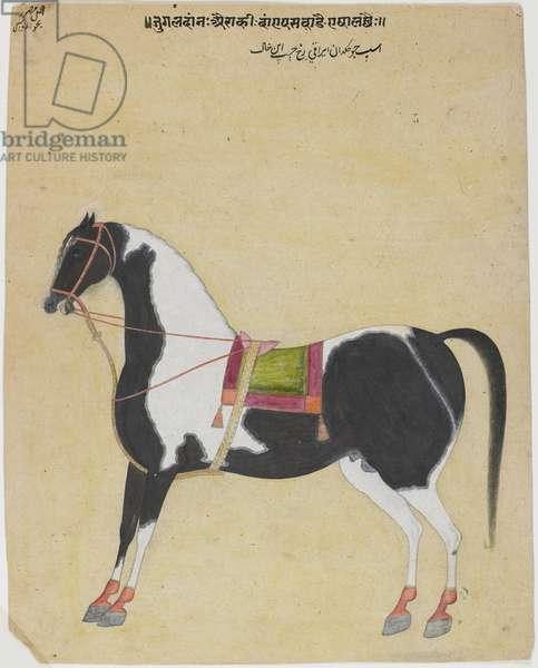 The Stallion Jukaldan Ayragi, c.1730 (opaque w/c on paper)
