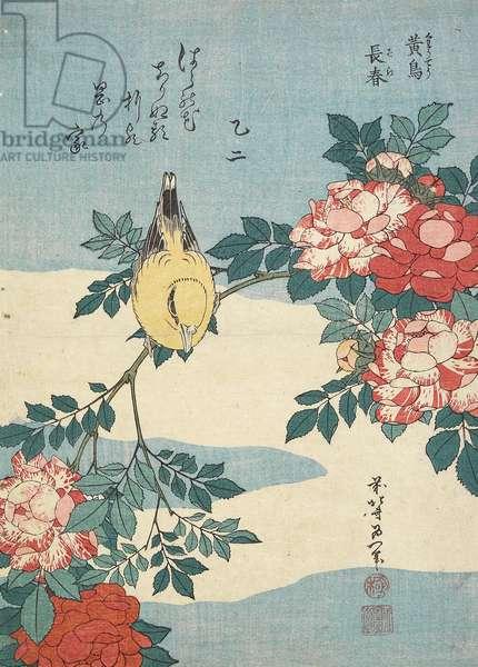 Japanese Nightingale and Spray of Roses, c. 1832