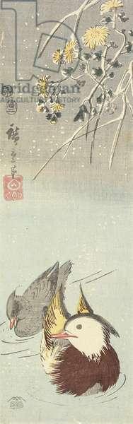 (Chrysanthemum and Mandarin Ducks), February 1854