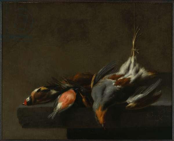 Still Life of Dead Birds, c.1660 (oil on panel)