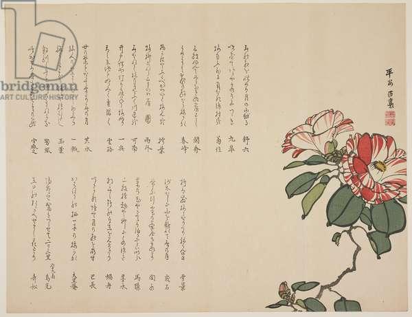 Flowering camellia, c.1818-1829 (colour woodblock print)