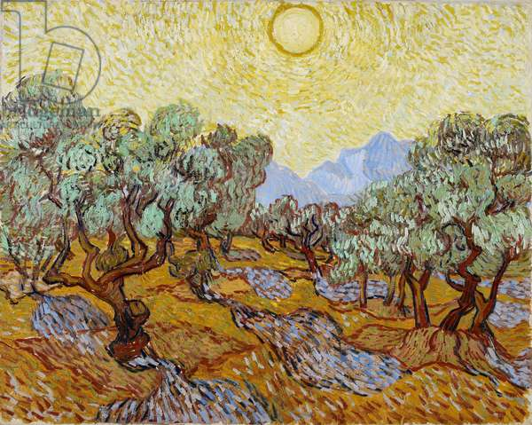 Olive Trees, 1889 (oil on canvas)