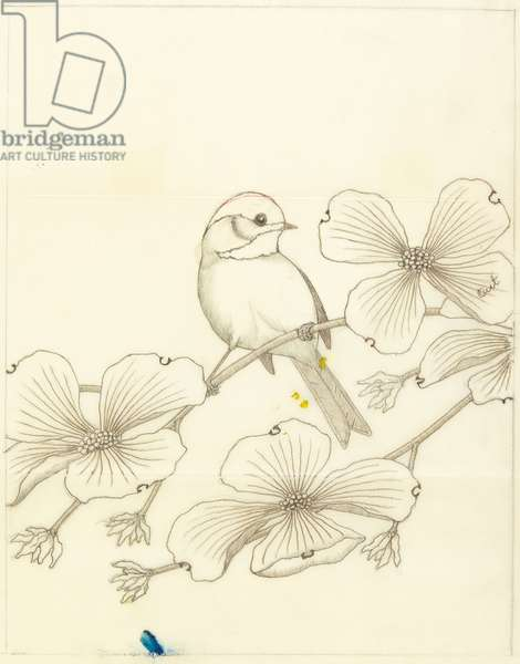 Chickadee, c.1968 (graphite & coloured pencil)