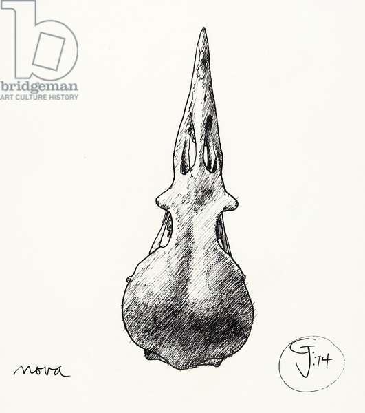 Nova, 1974 (pen & ink)