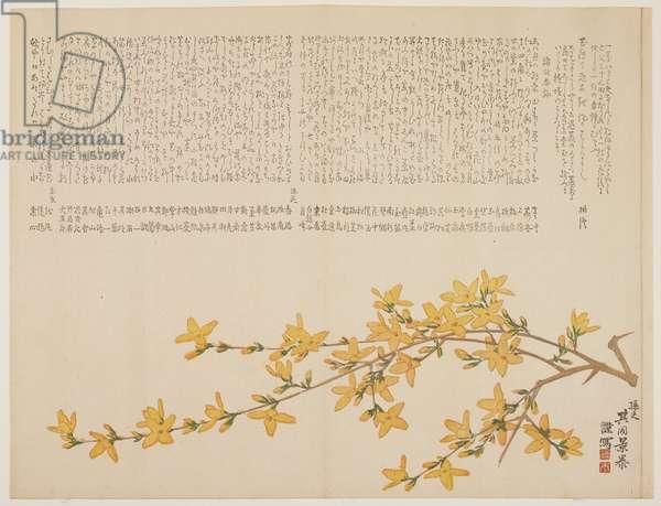 Japanese Yellow Rose, or Yamabuki, c.1818-29 (colour woodblock print)
