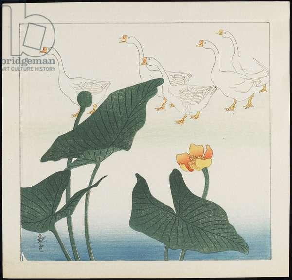 White Ducks, 1930s (colour woodblock print)