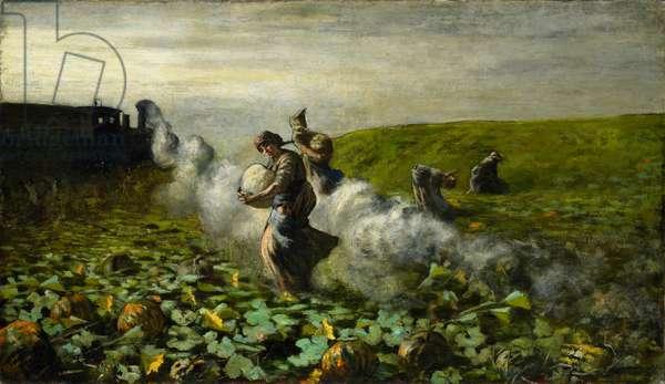 The Pumpkin Harvest, 1897 (oil on canvas)