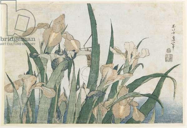 Iris Flowers and Grasshopper, c.1830-31 (colour woodblock print)