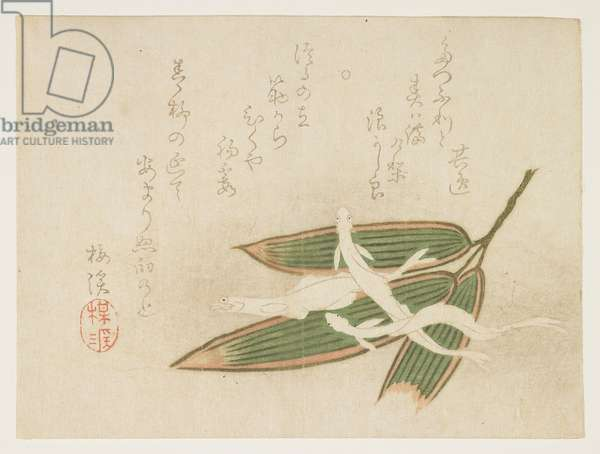 (Whitebait and bamboo leaves), c. 1860