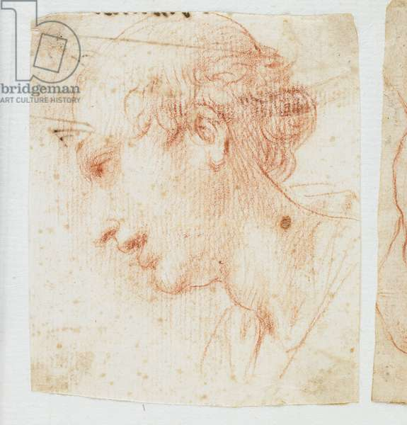 Head of a Young Man in Profile (red chalk)