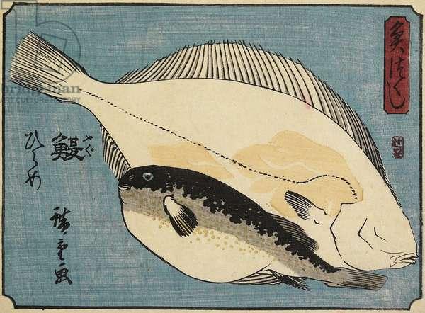 Globefish and Flounder, 1830-1844