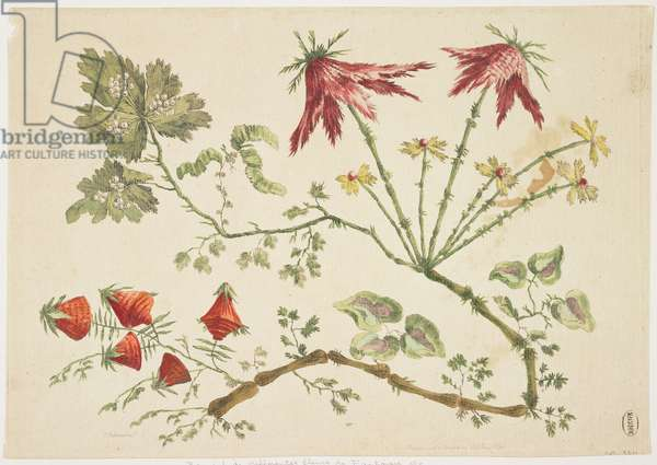Ornament, Chinoiserie, Flowers, June 30, 1760 (coloured etching)