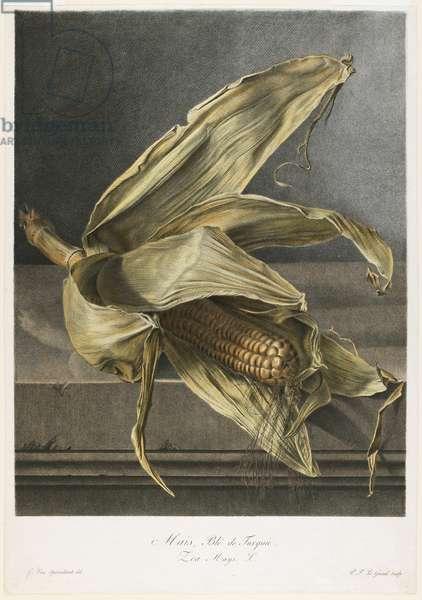 Mais, Ble de Turquie, from Fleurs Dessinees d'apres Nature, c.1800 (hand-coloured stipple engraving)