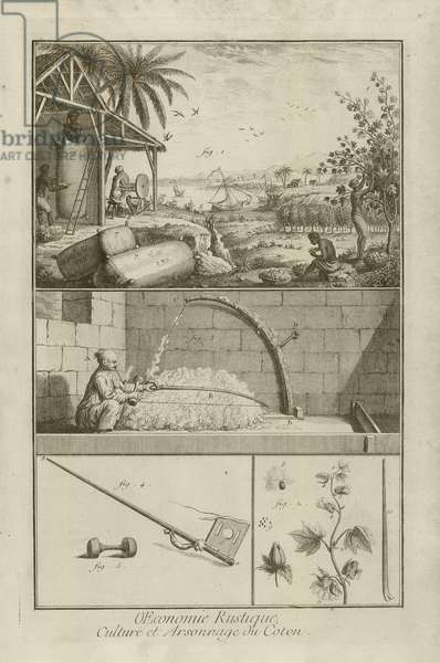 Cotton Field in America; Threshing with a Bow; Cotton Plant (Title), 1762