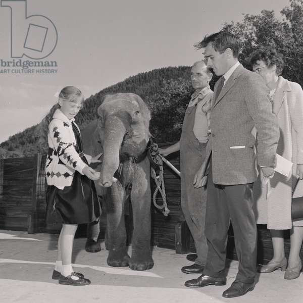Naming the elephant at Curraghs Wildlife Park, September 1965 (b/w photo)