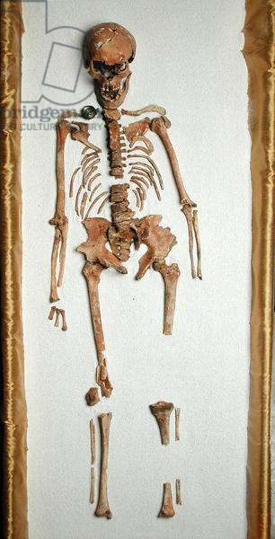 Female Saxon skeleton (bone)