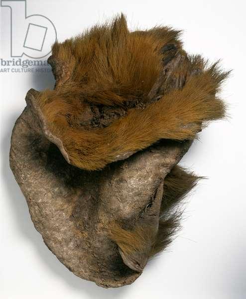 Ground sloth skin
