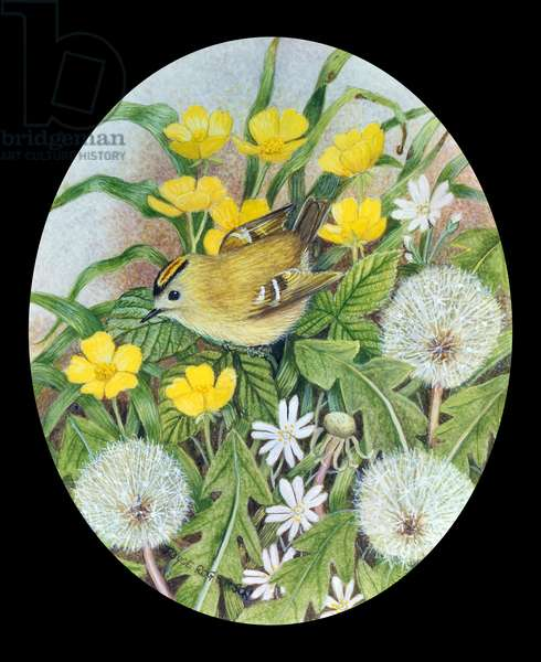 Goldcrest with Buttercups and Dandelions