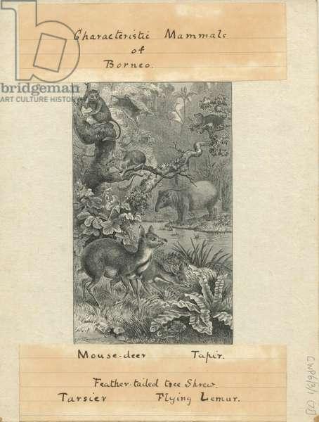 Characteristic Mammals of Borneo.