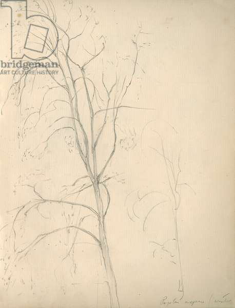 Pencil sketch of a tree