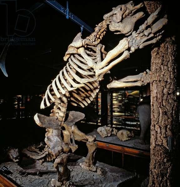 Megatherium, giant ground sloth