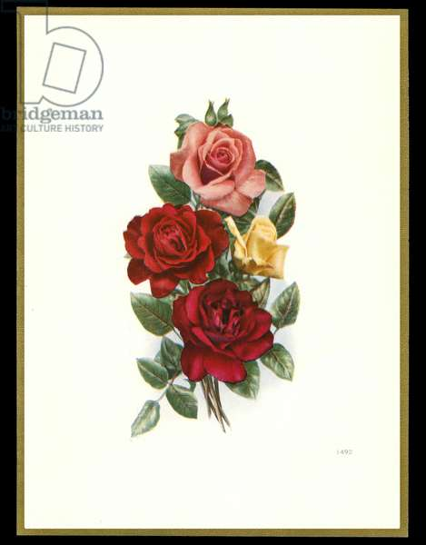 Chocolate box design, bunch of roses