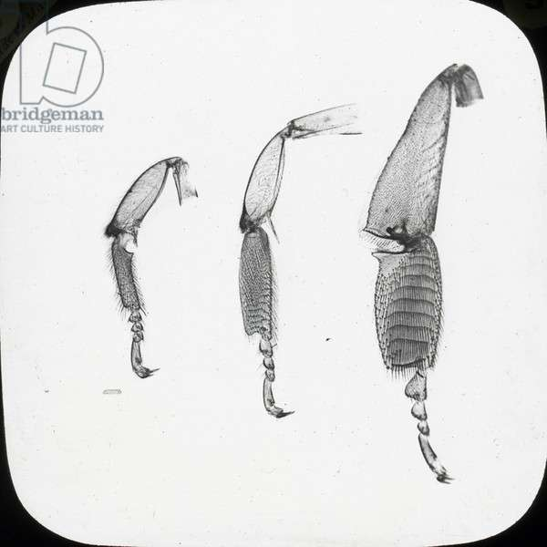 Beekeeping Lantern Slide series