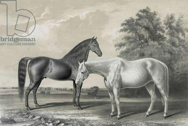 Black Hawk, Lady Suffolk, horses