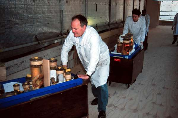 Moving specimens to the Darwin Centre