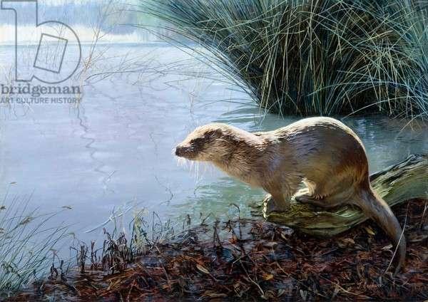 European Otter on a river bank