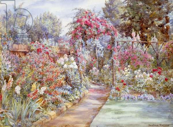 Summer Flowers, Oxhey, Hertfordshire