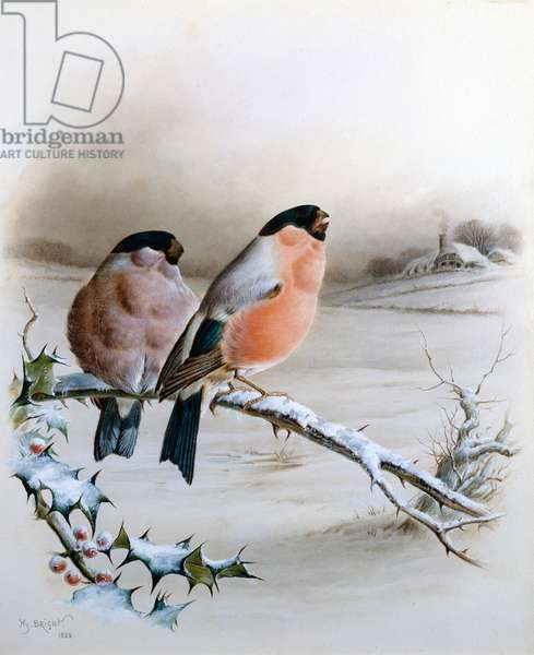 Bullfinches in a Winter Landscape