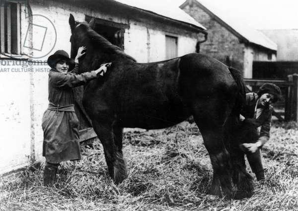 LANDGIRLS GROOMING HORSE