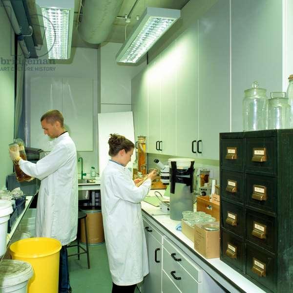 Laboratory in the Darwin Centre