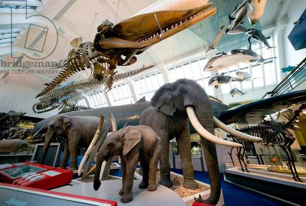 Mammal and Whale Gallery