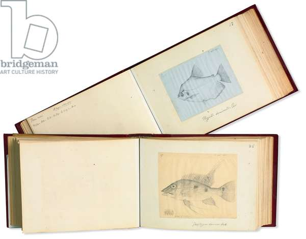 Notes and sketches by Alfred Russel Wallace (1823 - 1913)