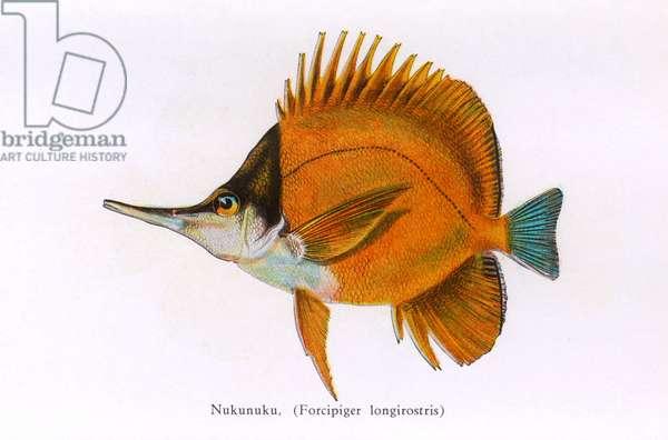 Nukunuku, Fishes of Hawaii