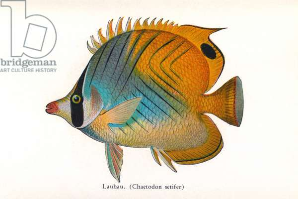 Lauhau, Fishes of Hawaii