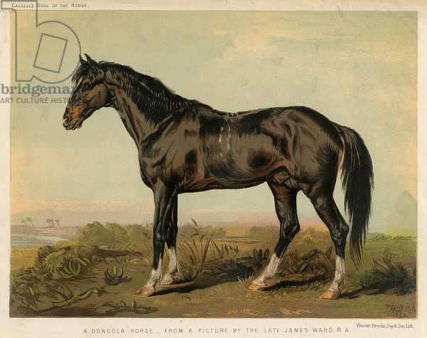 HORSE DONGOLA