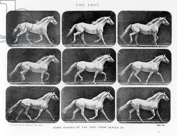 MUYBRIDGE - HORSE TROT