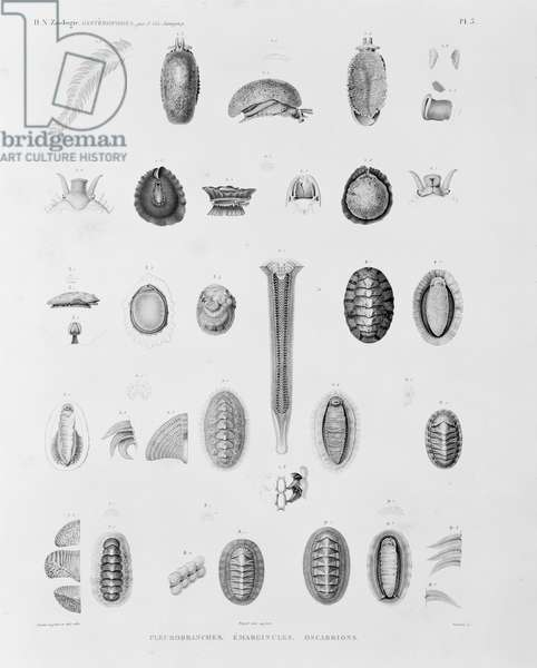 Collection of sea creatures