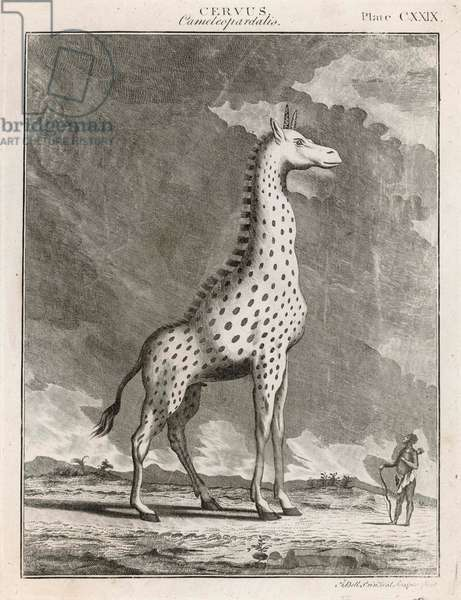 GIRAFFE, 18TH CENTURY