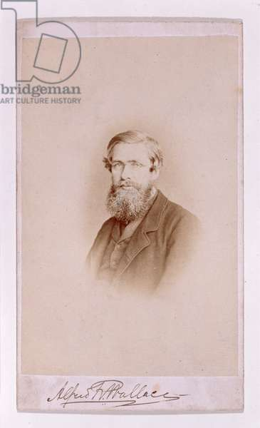 Alfred Russel Wallace (1823-1913)